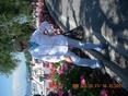 See Pantera 70's Profile